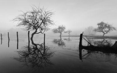 Jean-Robert Longhi, Baz'art de l'art